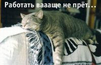 Александр Провидов, 17 сентября 1983, Санкт-Петербург, id16196393